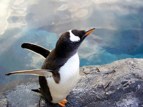 羽ばたくペンギン.jpg